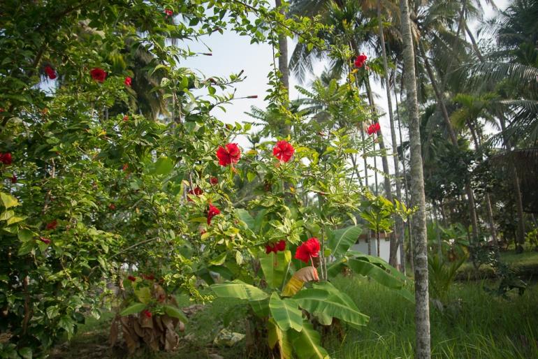 GramamHomestay_Cochin_India13022018_07
