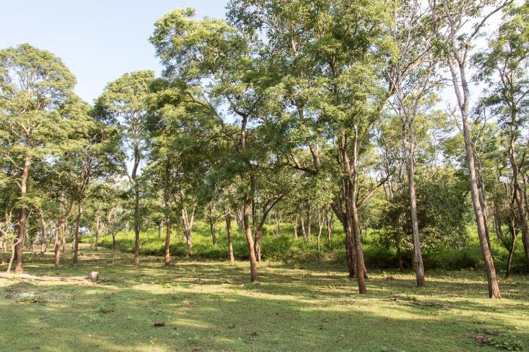 Mysore_Kabini_2110201821